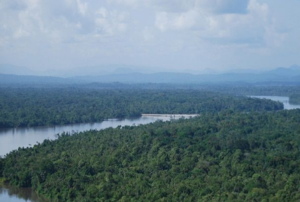 Préservation de la forêt : Le Gabon obtient plus de 10 milliards de francs CFA