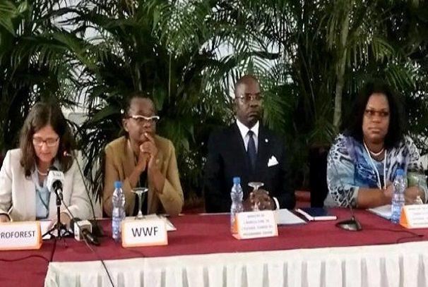 Huile de palme : Le Gabon creuse son sillon
