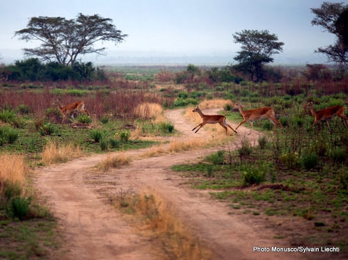 Nord-Kivu : 15 millions d'euros de l'UE pour lutter contre la pauvreté dans les Virunga