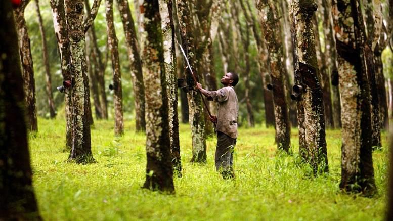 Gabon : 300 emplois disponibles à Olam Rubber Gabon