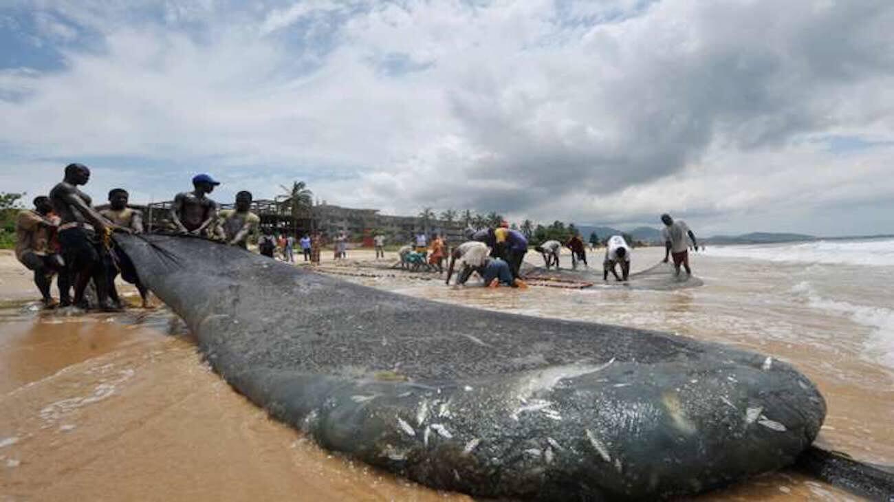 SierraLeone: la pêche industrielle interdite pour un mois, les acteurs approuvent