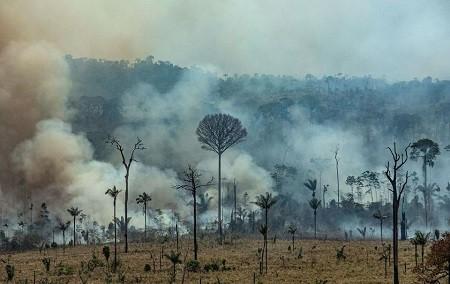 Brésil: Les entreprises françaises, complices des feux en Amazonie