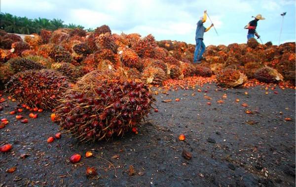 Guinée-Bissau: l'ONU investit pour diversifier l'agriculture face au changement climatique
