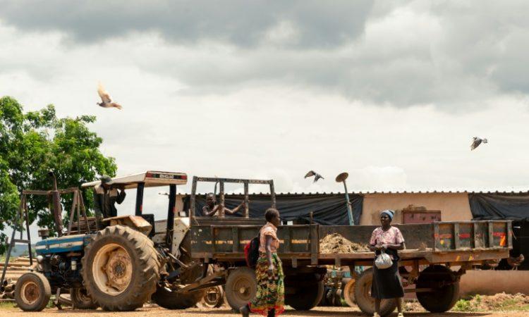 Vingt ans après, les plaies toujours à vif de la réforme agraire auZimbabwe