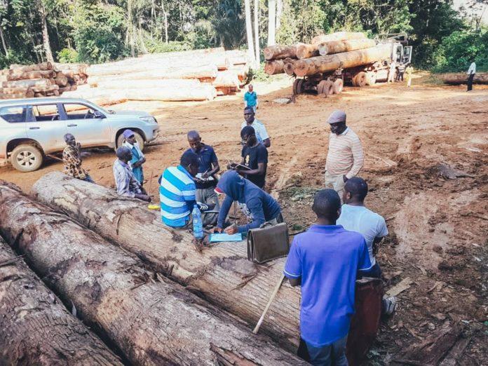 Gabon : Vaste opération en cours d'identification, de récupération et de valorisation des bois abandonnés