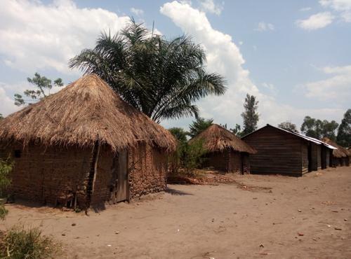 Massacre des pygmées en Ituri : la Dynamique des peuples autochtones condamne le silence des autorités